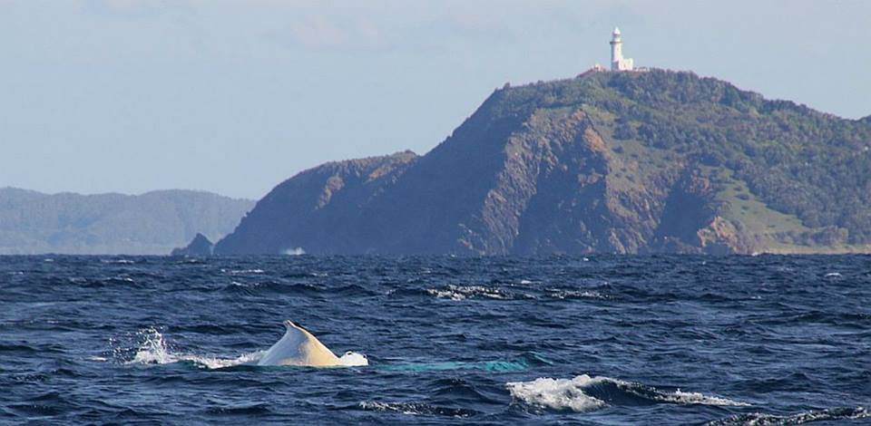 Migaloo visits Byron Bay and Light house