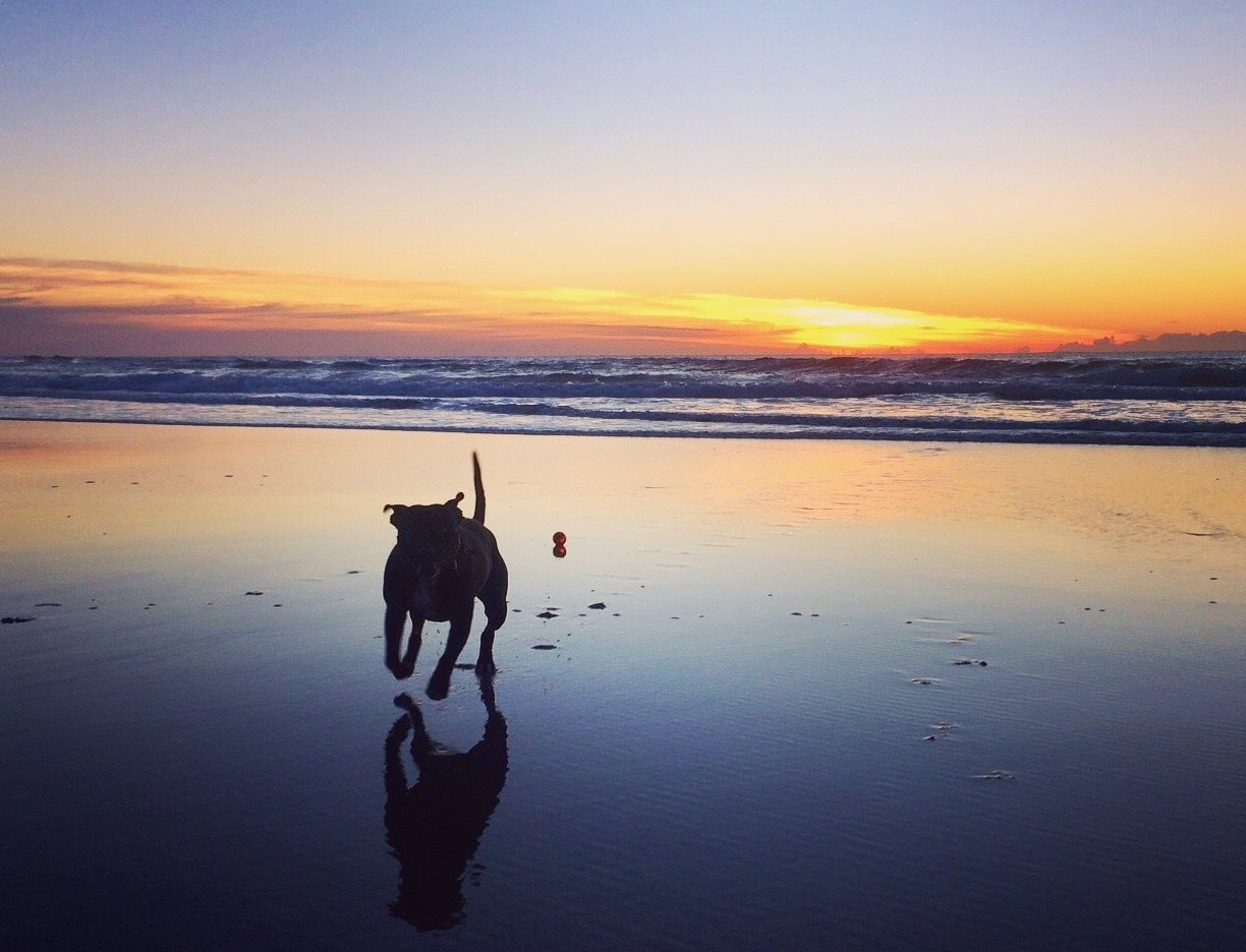 Sunrise South Golden Beach - photo Jenny Lasky - dog Yoshi